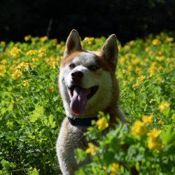 bélyegkép Vihar örökbefogadható kutyáról