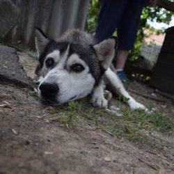 bélyegkép Gréta örökbefogadható kutyáról