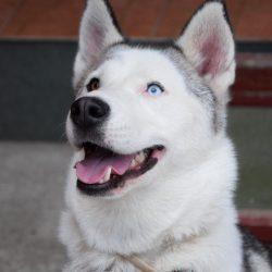 bélyegkép Azur örökbefogadható kutyáról