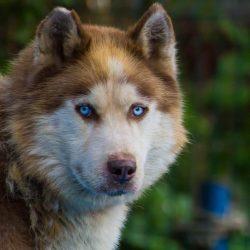 bélyegkép Dono örökbefogadható kutyáról
