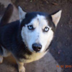 bélyegkép Alíz örökbefogadható kutyáról