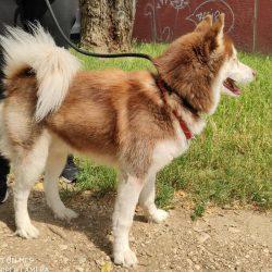 bélyegkép Schiller örökbefogadható kutyáról