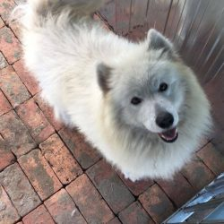 bélyegkép Törpe örökbefogadható kutyáról
